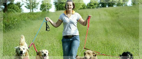 Why dog assessments are integral to the well being of your dog and the kennel.