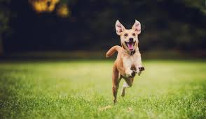 Train Your Dog to Come When Called!