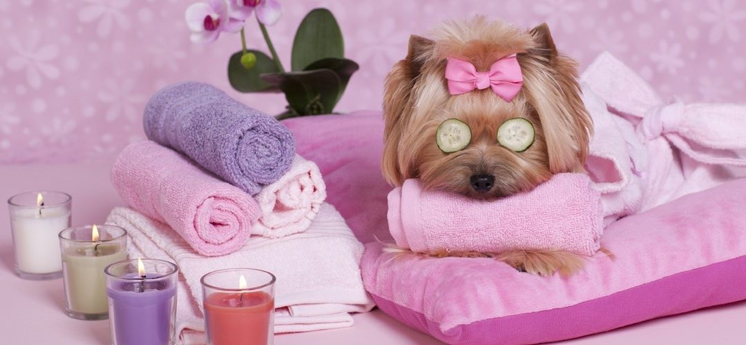 Ways to Help Your Dog Relax