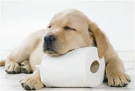 Potty Training Your Dog