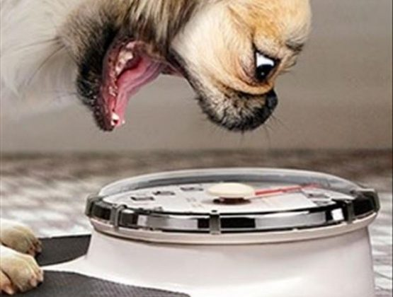 Managing Your Dog's Weight