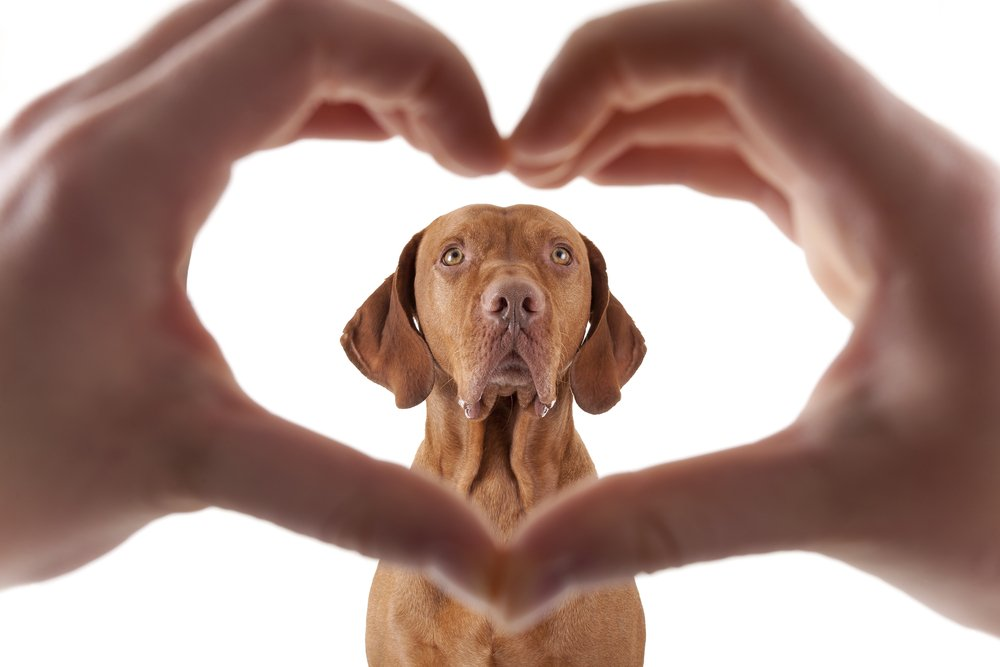 Ways Your Dog Says 'I Love You'