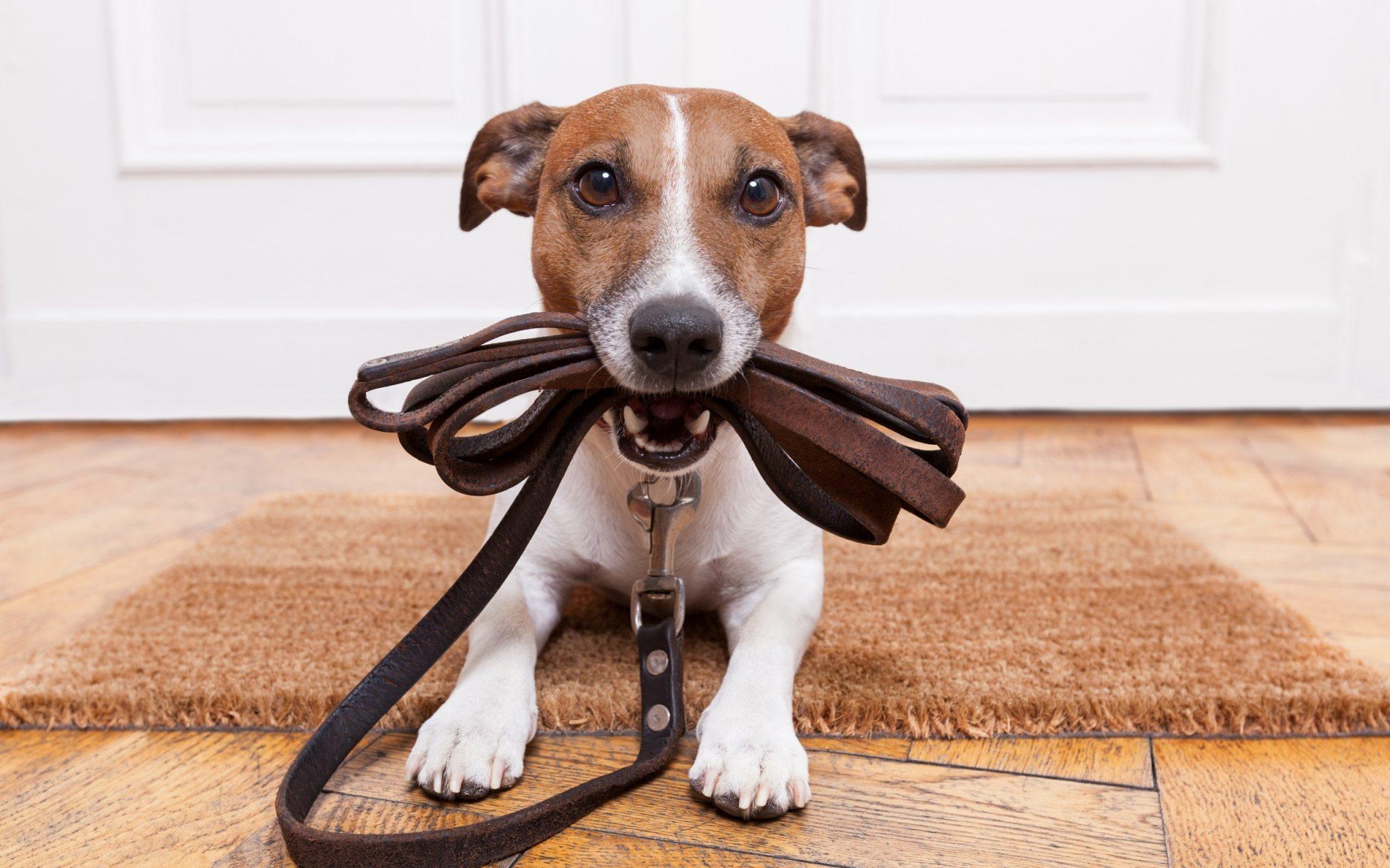 dog holding leash