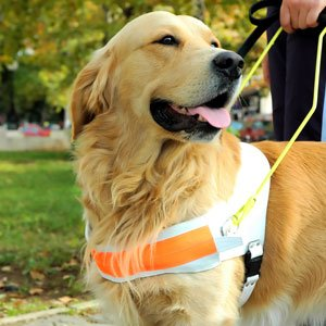 Becoming a Service Dog