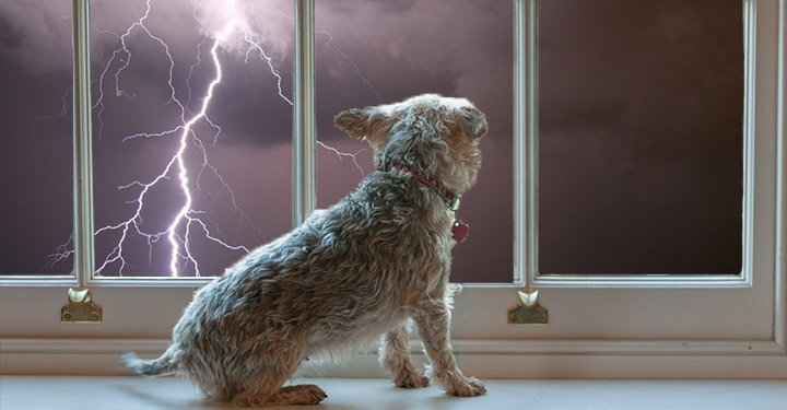 Dogs and Thunderstorm Anxiety