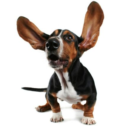 Importance of Keeping Your Dog's Ears Clean