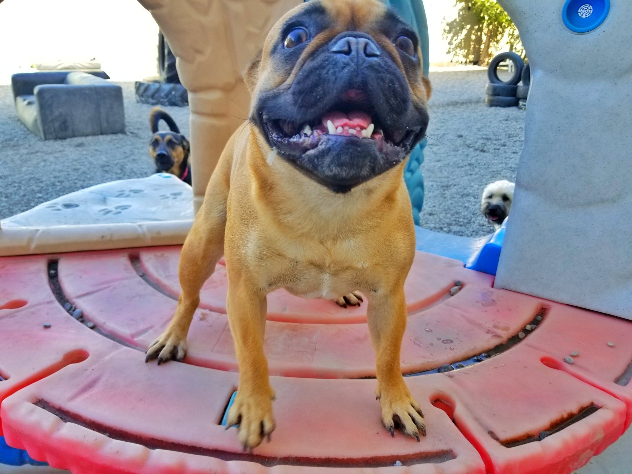 Paws Playgrounds Dog Friendly Toronto Events