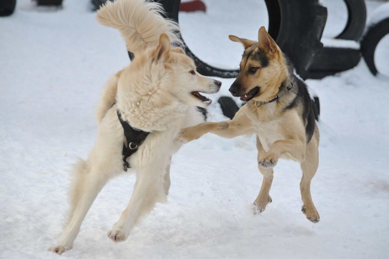 Paws Playgrounds Winter Dog Care Tips